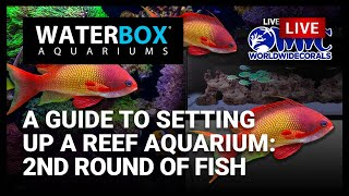 A Guide to Setting Up a Reef A…
