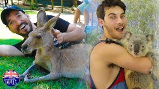 HOLDING KOALAS & CUDDLING KANGAROOS!
