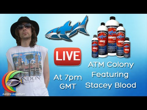 Let's Talk ATM Colony Featuring Stacey Blood Global Marketing Coordinator