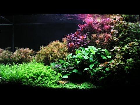 Аквариумные растения для начинающих аквариумистов! Какие растения надо садить в аквариум новичку!