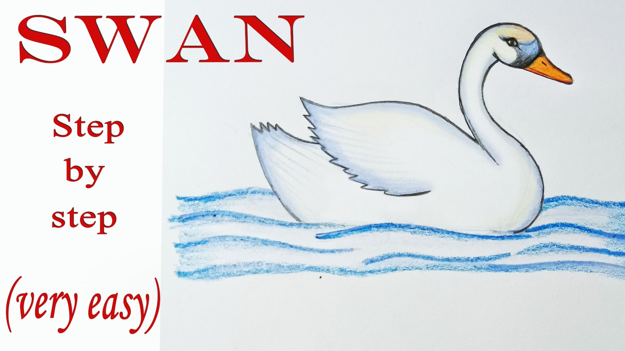 how to draw a swan step by step very easy