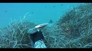 spearfishing adventures 12: winter in Evia island