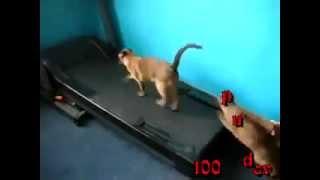 бегущие коты. running cats