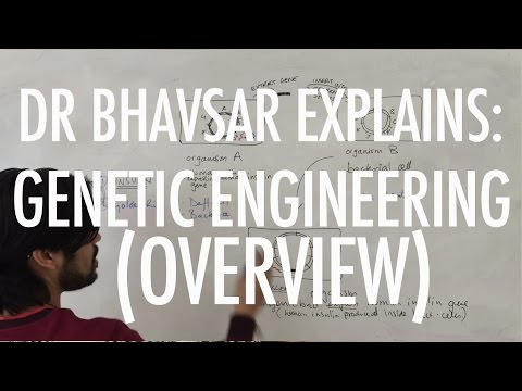 A2 Biology: Genetic engineering overiew