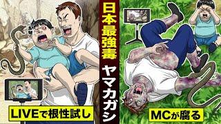 【実在】日本最強の毒蛇「ヤマカガシ」。根性試しのLIVE配信で…MCが腐敗した。