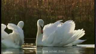 Calexico - Woven Birds