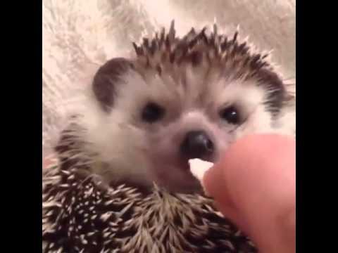 Hedgehog signaling Pathway - YouTube