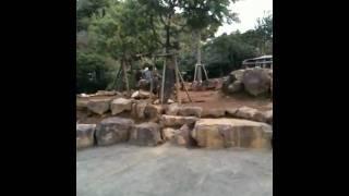 伊豆シャボテン公園のカンガルー部屋。