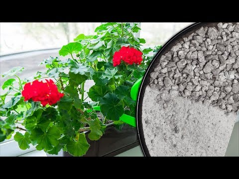 Зачем комнатным растениям нужна ЗОЛА? Как правильно применять золу для цветов?