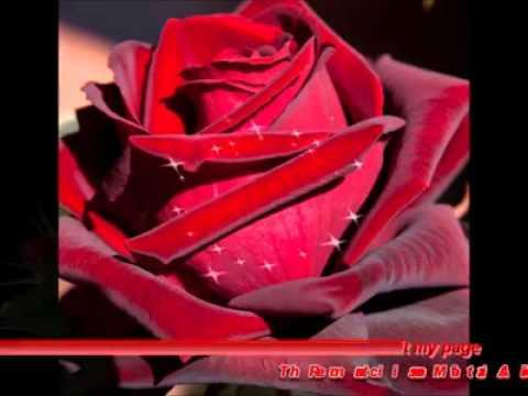 Fotos de rosas, im genes de rosas y 63