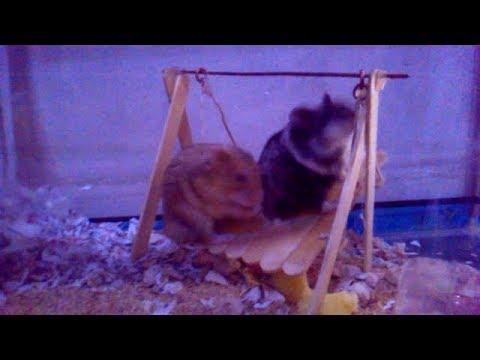 Cara Membuat Ayunan Hamster  Dari Stik Es Krim