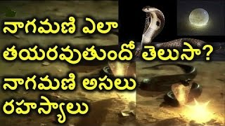 Nagamani Shocking Secrets Revealed || Episode 2