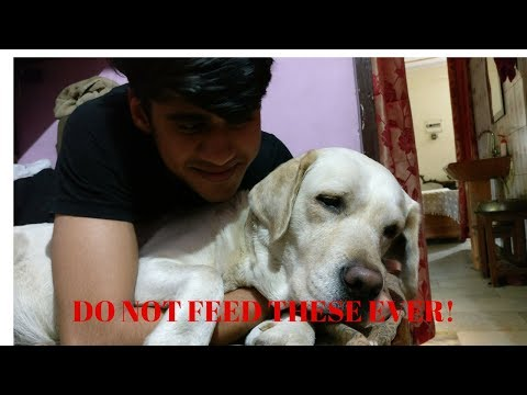 DO NOT FEED THIS TO YOUR DOG! | Harmful food to prevent | Wildly India