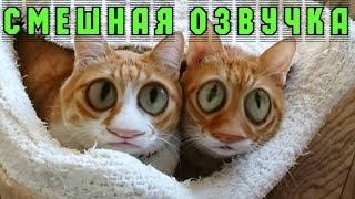 РЫЖИЕ КОТЫ СМЕШНАЯ ОЗВУЧКА! Полный РЖАЧ!!! Котики приколы с животными