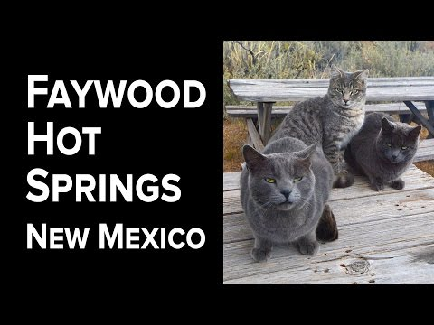 E03.Faywood Hot Springs and cats