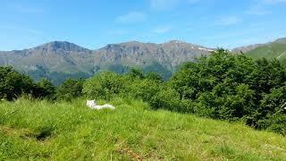 Болгария | Стара Планина | Белая собака | славянская жива обучение