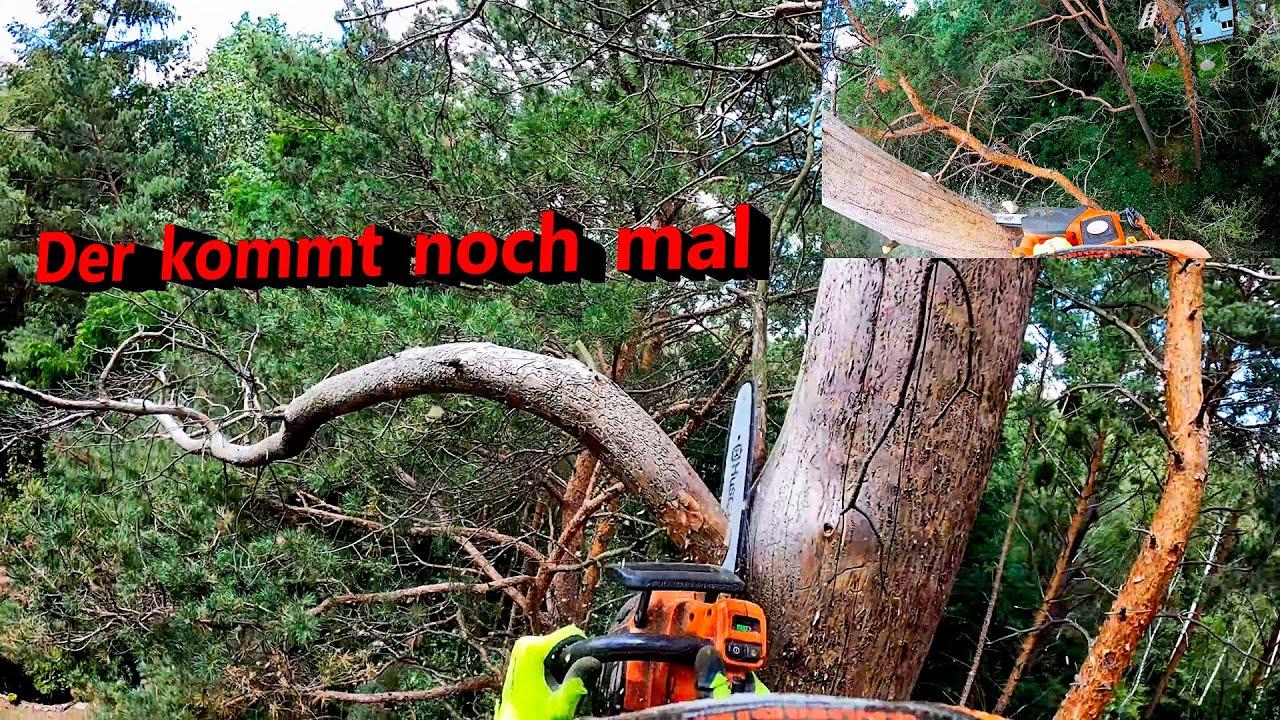 🌳Tote Bäume Montag I Bades Baumdienst 🐿