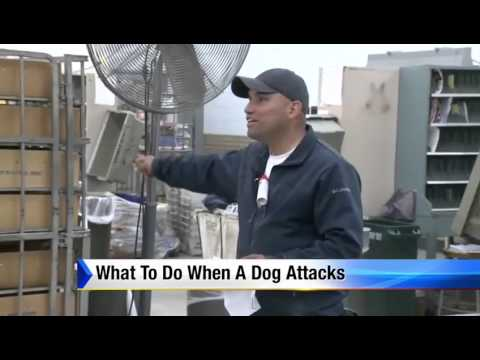 What To Do When a Dog Attacks