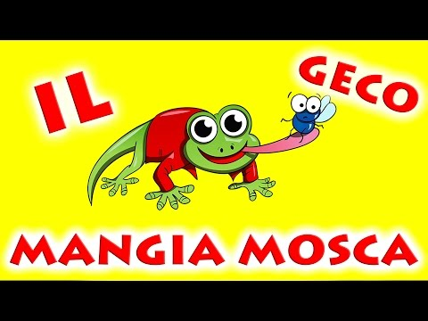 Il Geco Mangia Mosca OFFICIAL BABY DANCE