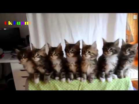 Смешное видео про кошек 2 -
