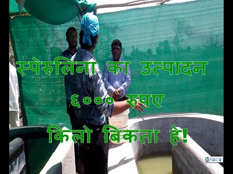 spirulina farming in india