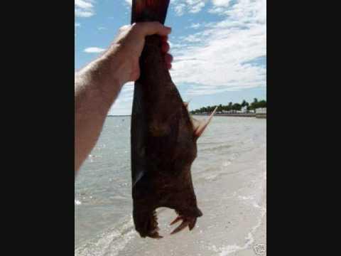 The Devil Fish