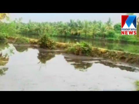 Pokkali farming in North Paravur| Manorama News