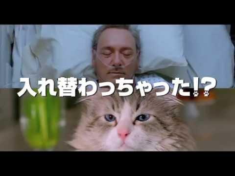 映画『メン・イン・キャット』特別動画「君のニャは。」編ほか