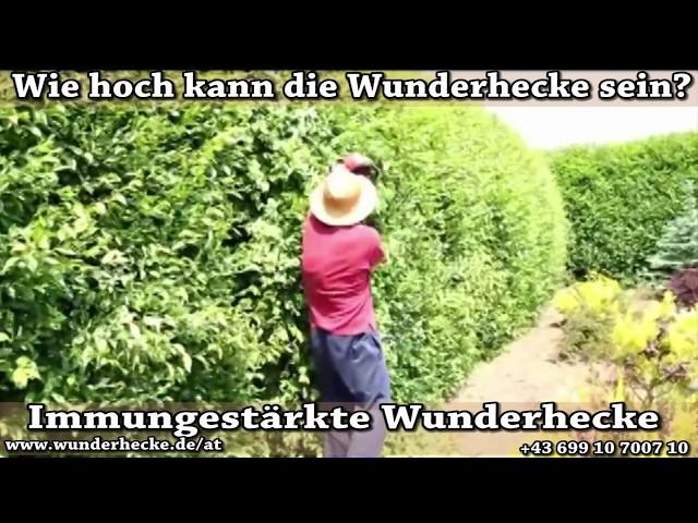 Wunderhecke Die Beschützerin Des Gartens Videos