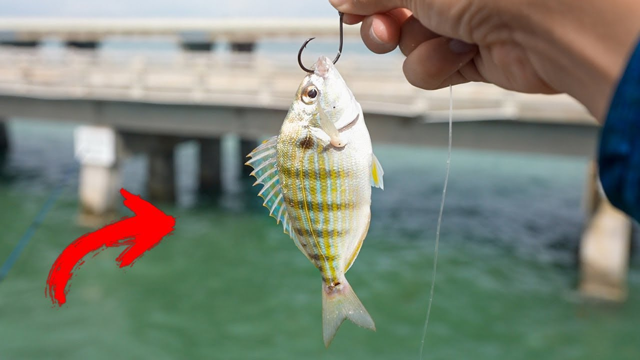Searching for Bridge MONSTERS!! - WORLD'S LONGEST Fishing Pier!!