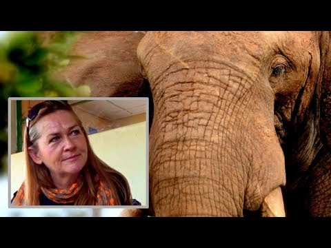 Meet Lynn who saves elephants in Malawi