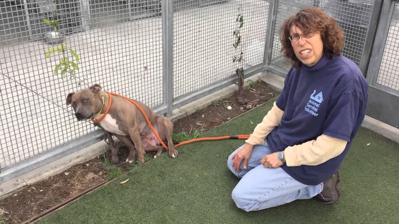 momma girl available for adoption at south los angeles animal