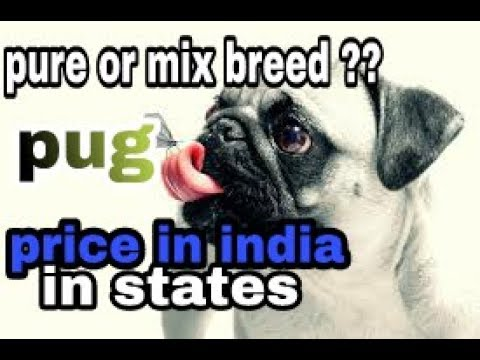 Pug price in india in her states || how o check purity in hindi || dogs biography