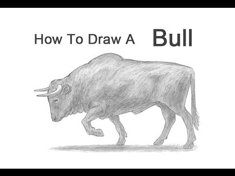how to draw a bull youtube