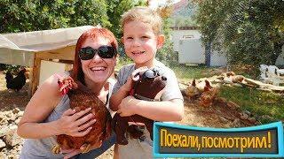 Приключения на ферме: Маша Капуки и курочки. Видео для детей.
