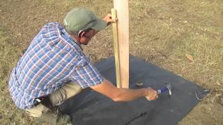 How To Plant a Dunstan Chestnut Tree