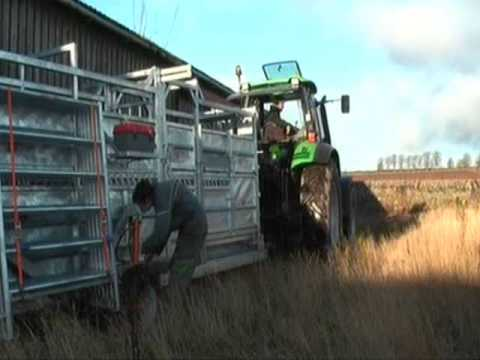 Ritchie Mobile Cattle Handling Crate (being set-up)