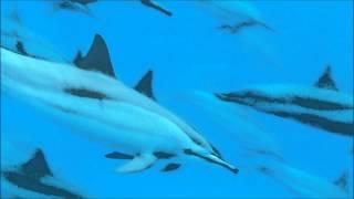 Wyona, Jolina & the dolphins