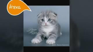Показ котят