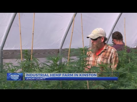 Local farmer looks to industrial hemp as NC's next possible cash crop