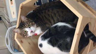 ひのき家の匂いを嗅ぎまくる猫