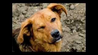 видео фильм собаки и кошки