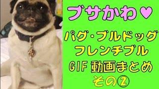 イヌ好きのイヌ好きによるイヌ好きのための傑作GIF動画まとめ、パグ・ブ...