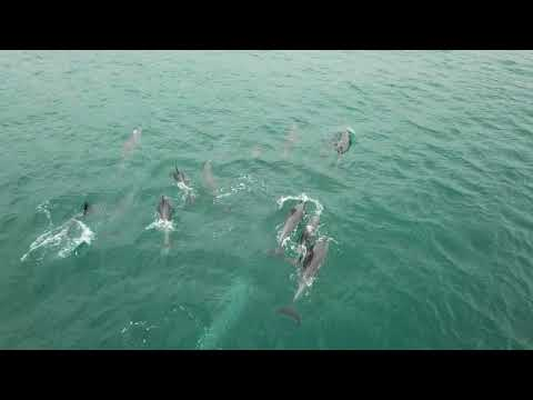 Skating & dolphins by drone