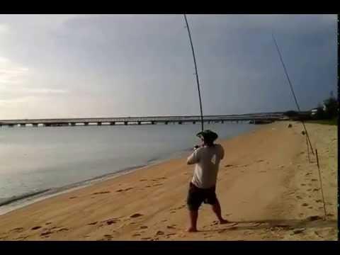ikan pari 11/1/2015 di pantai puteri melaka,malaysia