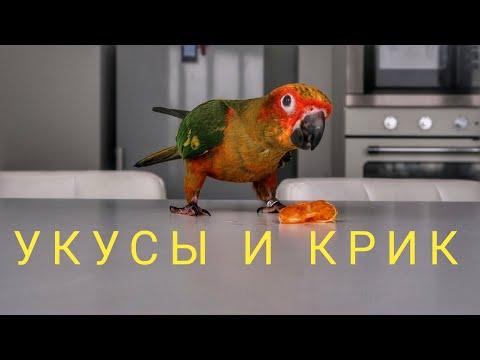 солнечная аратинга#4 крик попугая.укусы