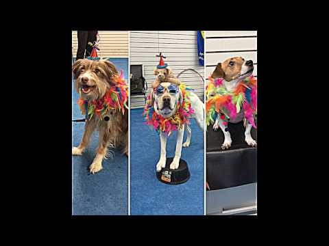 Circus Dog Class!  Feb 2017