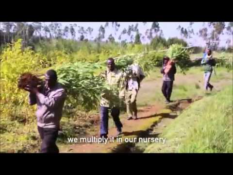 African Bamboo Project, Innovation and sustainability