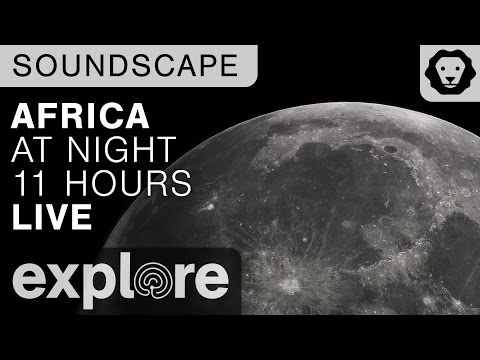 African Watering Hole Night Soundscape  - 11 Hours of Live Cam Sound