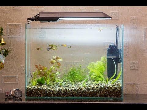 Запуск и оформление аквариума 20 литров (качество 4К) start aquarium